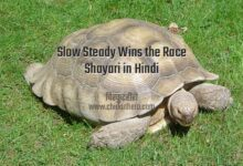 Photo of Slow Steady Wins the Race Shayari in Hindi