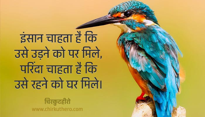 Birds Shayari
