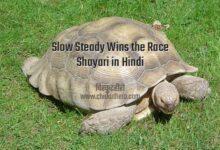 Slow Steady Wins the Race Shayari in Hindi
